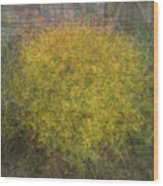 Spirea Wood Print