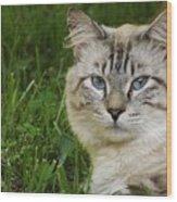 Spirit Cat Wood Print