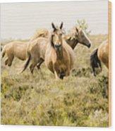 Spirit Of The Horse Wood Print
