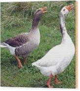 Spirited Geese Wood Print