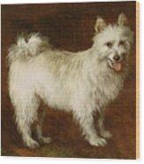 Spitz Dog Wood Print by Thomas Gainsborough