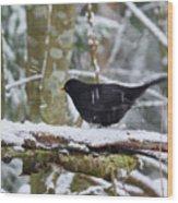 Splash. Eurasian Blackbird Wood Print