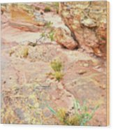 Splash Of Color In Valley Of Fire's Wash 3 Wood Print