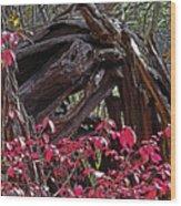 Splash Of Red Wood Print