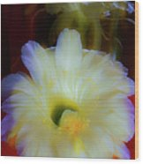 Splendid  Flower Of Cactus. Wood Print