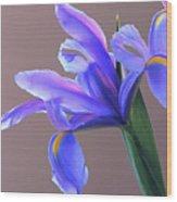 Splendid Iris Wood Print