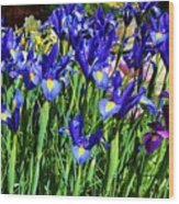 Vivid Blue Iris Flowers Wood Print