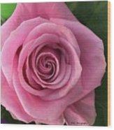 Splendid Rose Wood Print