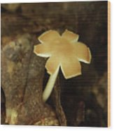 Split Capped Mushroom Wood Print