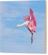 Spoonbill Ballet Wood Print