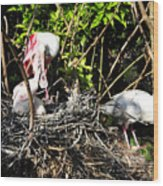 Spoonbill Family Wood Print