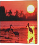 Spoonbills At Sunset Wood Print