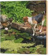 Sporty At The Lily Pond Wood Print