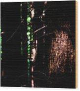 Spotlight In The Woods Wood Print
