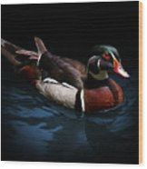 Spotlight On A Wood Duck Wood Print