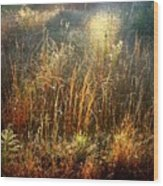 Spotlight On The Marsh Wood Print