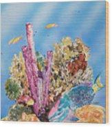 Spotlight Parrotfish Wood Print