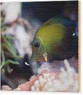 Spotted Aquarium One Fish Wood Print