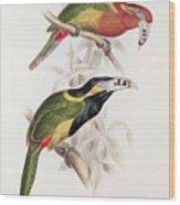 Spotted Bill Aracari Wood Print by Edward Lear