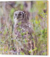 Spotted Eagle Owl  Wood Print