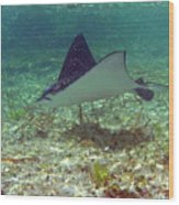 Spotted Eagle Ray Wood Print