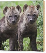 Spotted Hyena Cubs I Wood Print