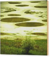 Spotted Lake Wood Print