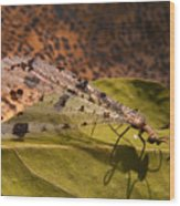 Spotted Mayfly Wood Print