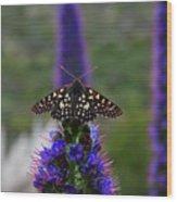 Spotted Moth On Purple Flowers Wood Print