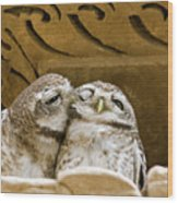 Spotted Owlets Wood Print