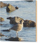 Spotted Sandpiper Keeping Sentry On The Bay Wood Print
