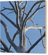 Sprawling Dead Tree Wood Print