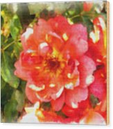 Spread Petals Of A Red Rose Wood Print