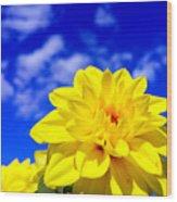 Spring 2015-pic18 Wood Print