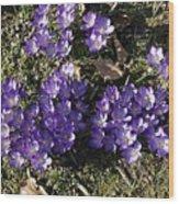 Spring 3 Wood Print