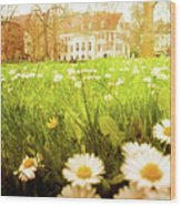 Spring. A Medow Spread With Daisies In Baden-baden, Germany Wood Print