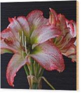 Spring Amaryllis Wood Print