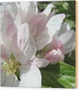 Spring Apple Blossoms Art Prints Apple Tree Baslee Troutman Wood Print