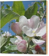 Spring Apple Blossoms Pink White Apple Trees Baslee Troutman Wood Print