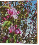 Spring Apple Blossoms- Spring Flowers Wood Print