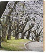 Spring Apple Orchard Wood Print
