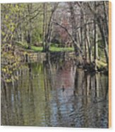 Spring Arrives Wood Print