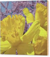 Spring Art Prints Yellow Daffodils Flowers Pink Blossoms Baslee Troutman Wood Print
