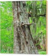 Spring Bayou Wood Print