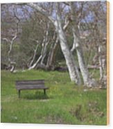 Spring Bench In Sycamore Grove Park Wood Print