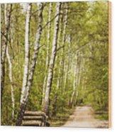 Spring Birches Woods Footpath Wood Print