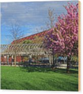Spring Bloom At Christopher Columbus Park Boston Ma Cherry Blossoms Wood Print