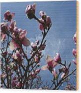 Spring Blooms 2010 Wood Print