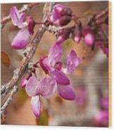 Spring Blooms In Nevada Wood Print