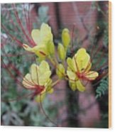 Spring Blooms Yellow Red 052814a Wood Print